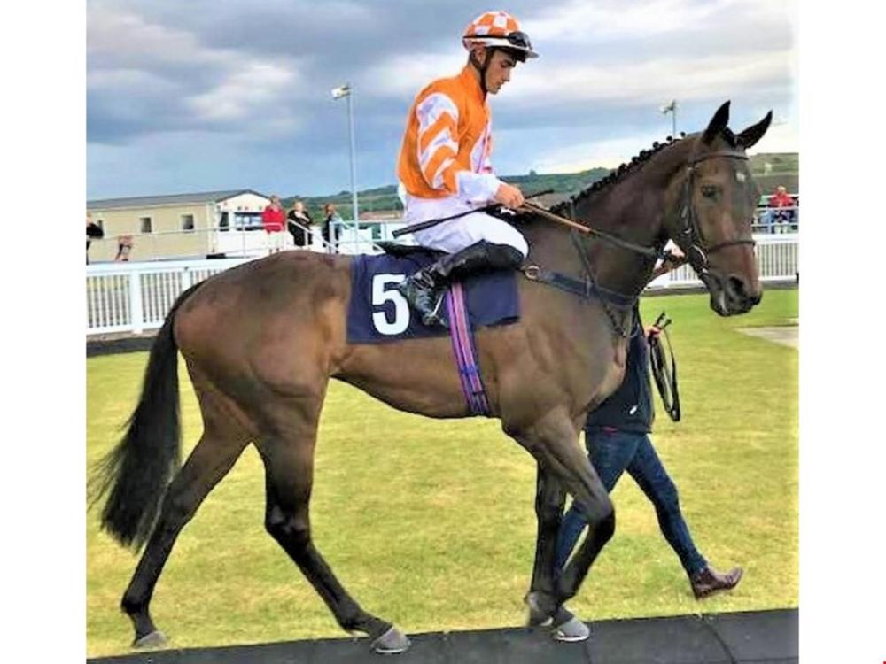 Racehorses For Sale - Buying A Racehorse | Race Horse Trader