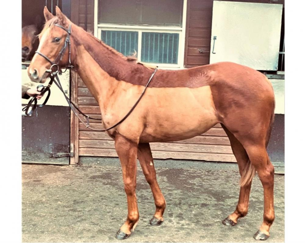 Photo of 2019 Filly by Sixties Icon (GB) ex Excellent World (Ire)