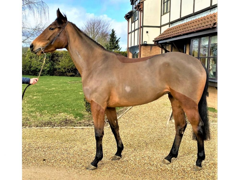 Photo of 2018 Filly by Acclamation (GB) ex Nymfia (Ire)