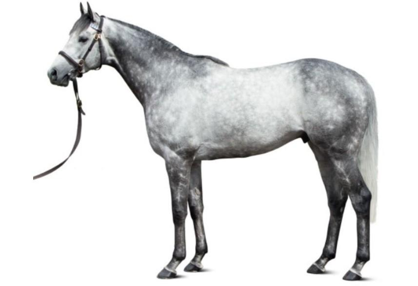 Photo of Outstrip (GB)