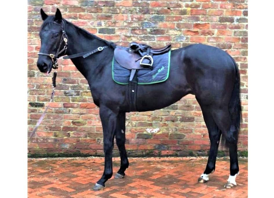 Photo of 2019 Colt by Fountain of Youth (Ire) ex So Discreet (GB)