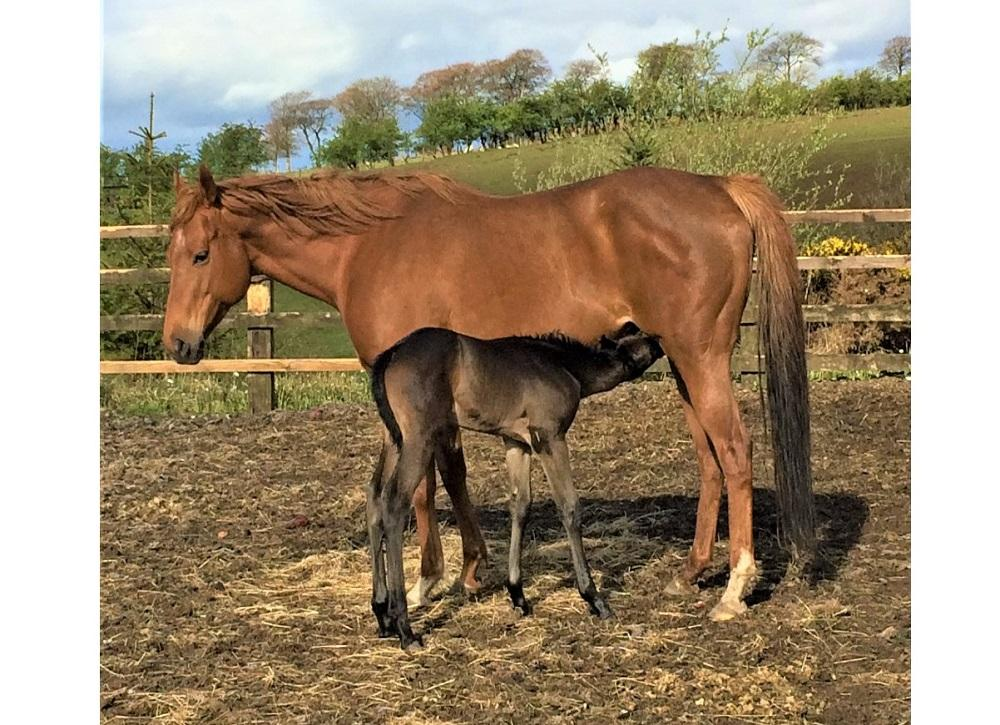 Photo of Eternalist (GB) and colt foal by Orientor (GB)