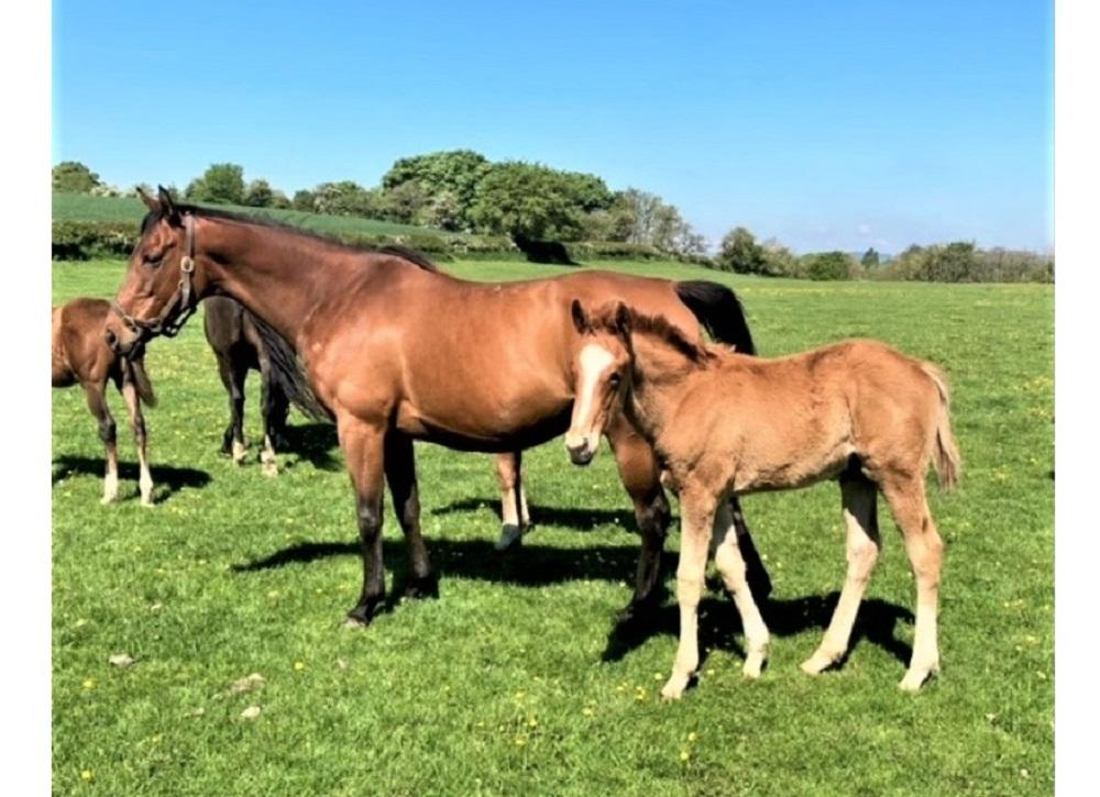 Photo of Laughing Water (Fr) and foal