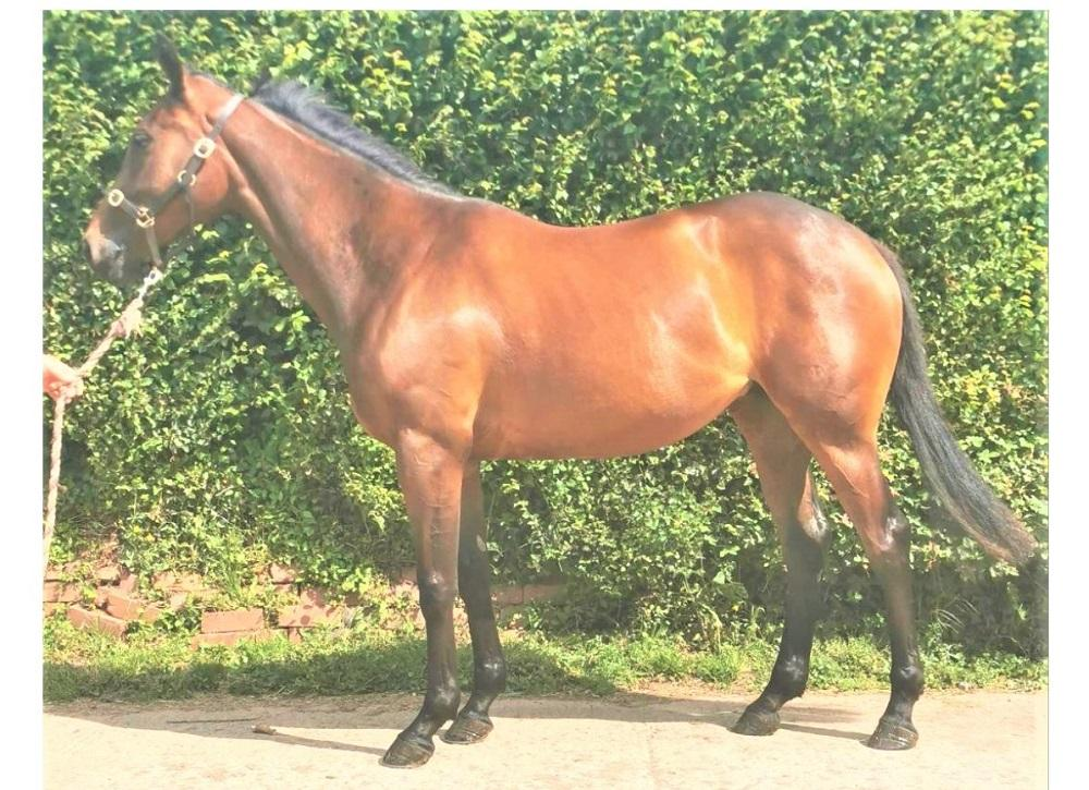 Photo of 2019 Filly by Alhebayeb (Ire) ex Rock Cake (Ire)