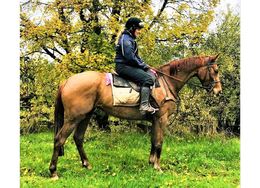 Photo of 2016 Mare by Gentlewave (Ire) ex Our Ethel (GB)