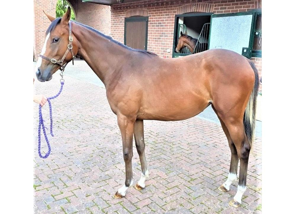 Photo of 2020 Filly by Sun Central (Ire) ex Fettuccine (Ire)