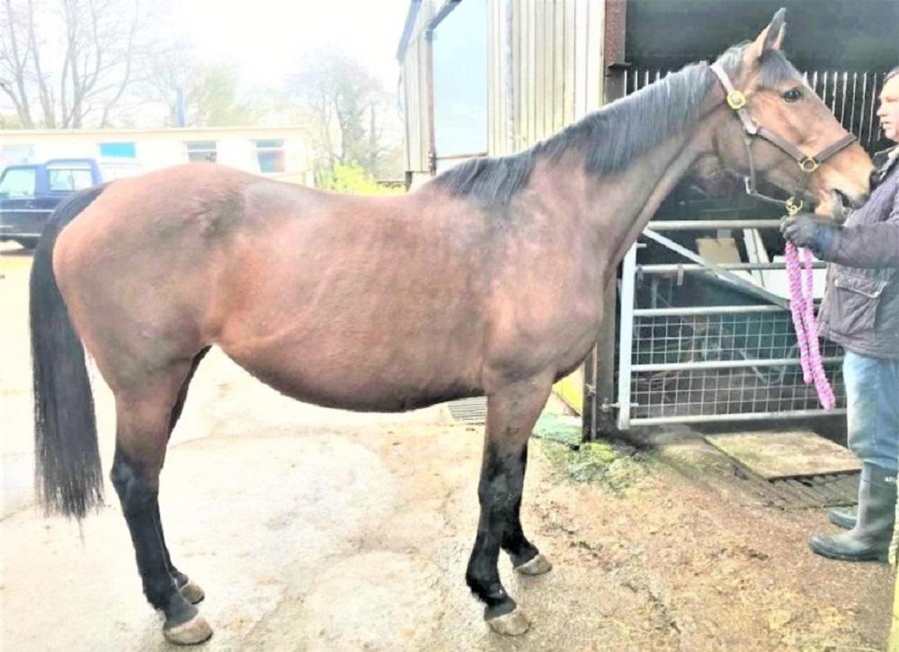 Photo of Auction Belle (GB)
