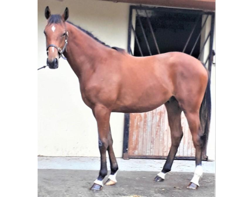 Photo of 2019 Colt by Buratino (Ire) ex Tales of Erin (Ire)