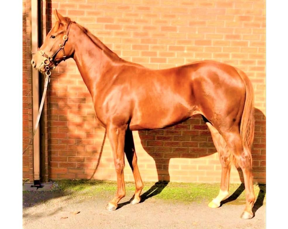 Photo of 2019 Filly by Garswood (GB) ex Roslea Lady (Ire)