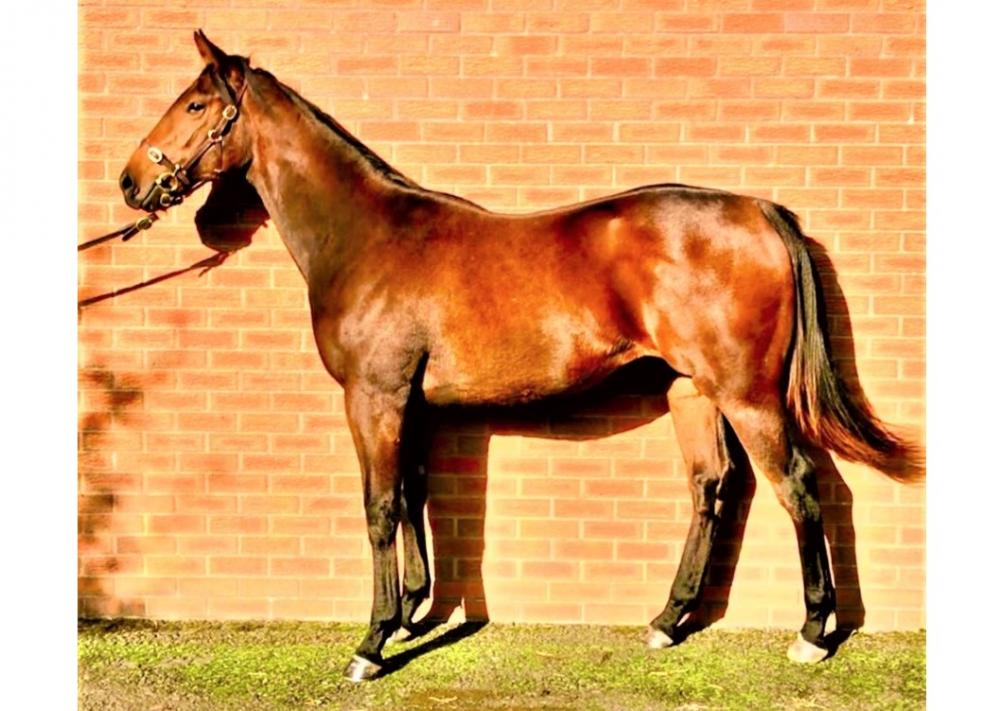 Photo of 2019 Filly by Fountain of Youth (Ire) ex Rememberance Day (GB)