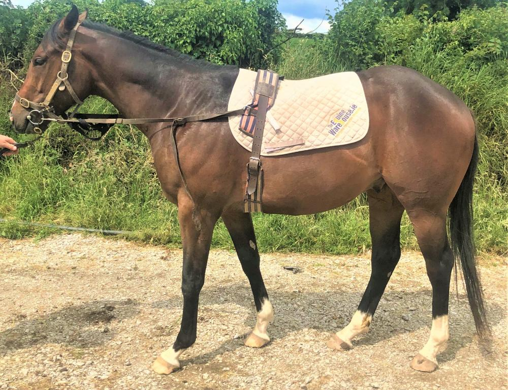 Photo of 2018 Gelding by Power (GB) ex Big Heart (GB)