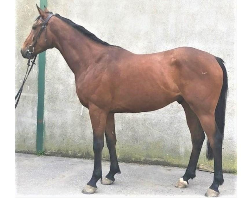 Photo of 2017 Gelding by Canford Cliffs (Ire) ex Inishkea (USA)